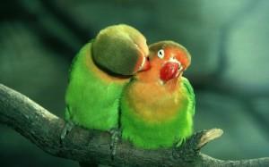 cennet-papağanı_361908