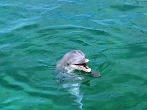 jpeg-fondos-de-delfines-imagen-bonito-delfin-107915