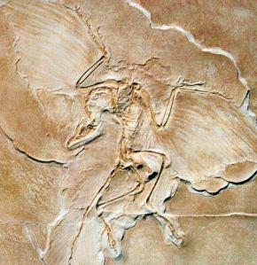 189_fossilofbird