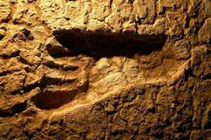 fosilfootprint1