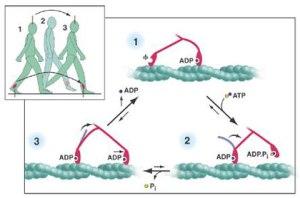 molekuler1_4