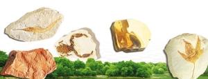 sahte-fosil-sergisi-degil-adnan-oktar-harun-yahya-pkk-evrim-teorisi