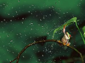 frog_with_leaf_umbrella_wallpaper_s_2032032530.1024x0