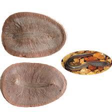 Dövr: Paleozoy erası, Daş kömür dövrü Yaşı: 300 milyon il Bölgə: Meyzon Krik, Breydvud, İlinoys, ABŞ