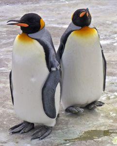 200842415534_pinguin