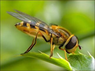 arı-resimleri