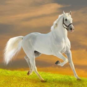 beyaz-at