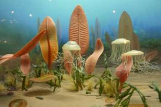 Ediakar-fosil-canli-5jk