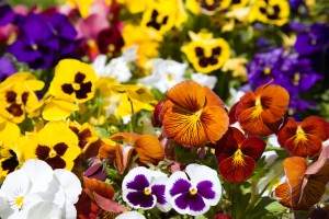 2-ideas-of-spring-bedding-plants-2014