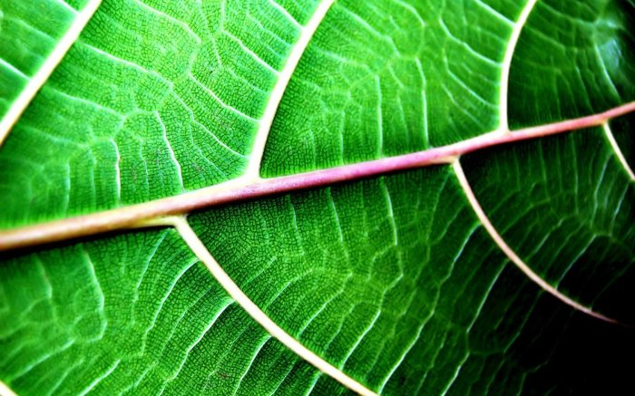 green-leaf-macro-texture-1680x1050