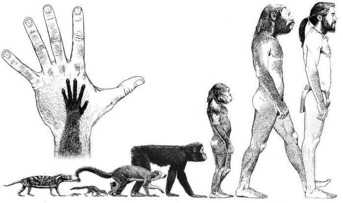 human-evolution18